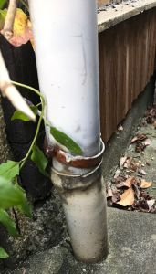竪樋からの雨水の出口確認をする